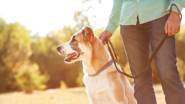 La oxitocina promueve la interacción con las mascotas