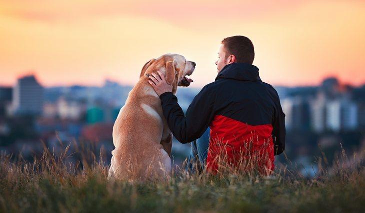 Con paciencia y constancia se quitará el miedo a los perros