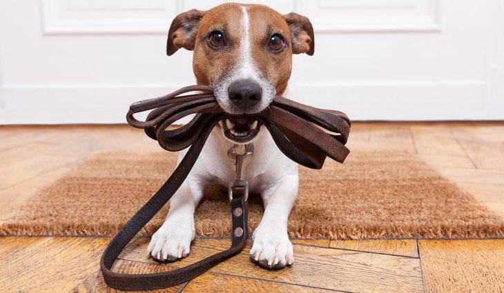 Estas mascotas suelen ser las que protegen el hogar y sus integrantes