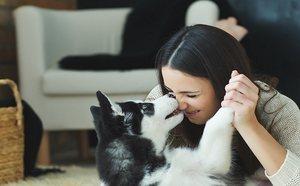 Lecciones de vida que aprenderás de tu mascotas (sobre todo de los perros)
