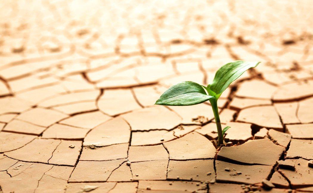 Cómo desarrollar la resiliencia
