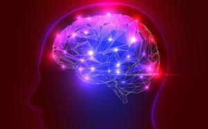 La Amígdala El Centro Cerebral De Las Emociones Bekia