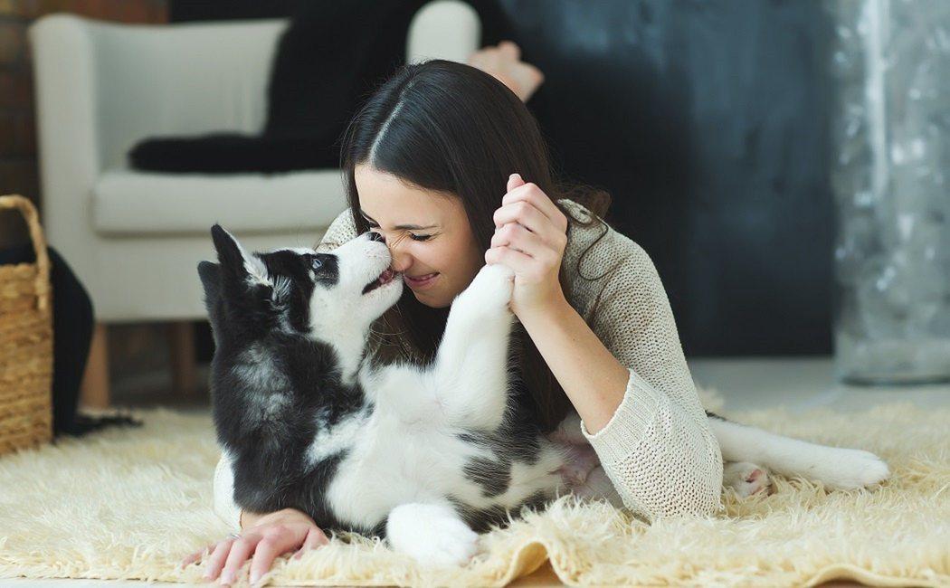 Los perros pueden ayudar a mejorar tu salud mental