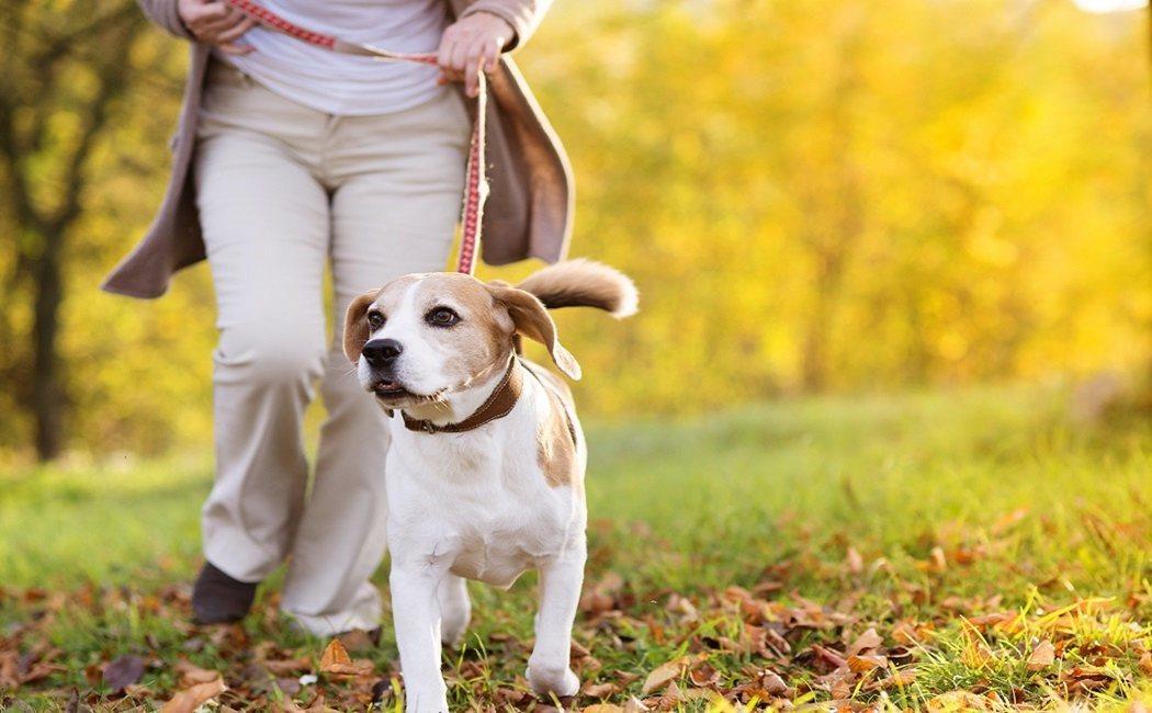 Una mascota puede romper o unir tu relación de pareja